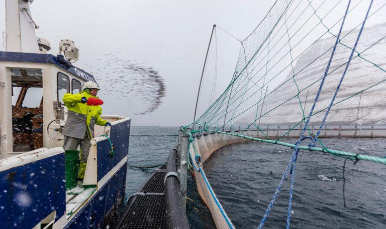 Article image for Para estos productores nórdicos de salmón, está hecho de manera específica