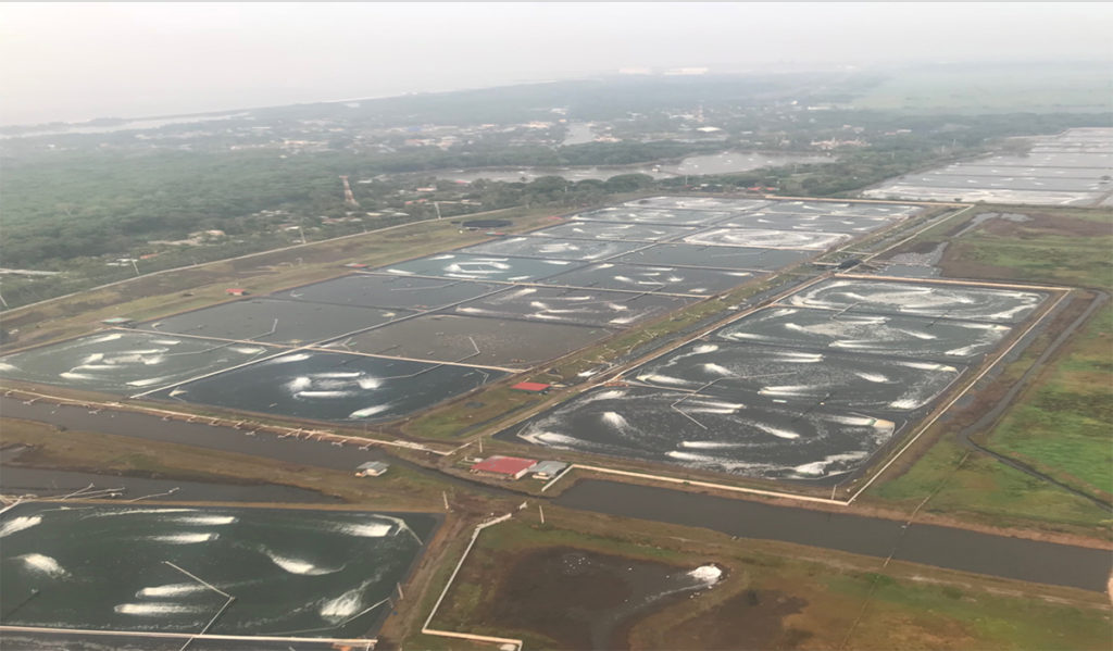 Article image for Shrimp farming in Guatemala has gone intensive