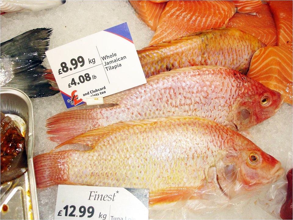 Article image for Expanding tilapia supply meets growing global market