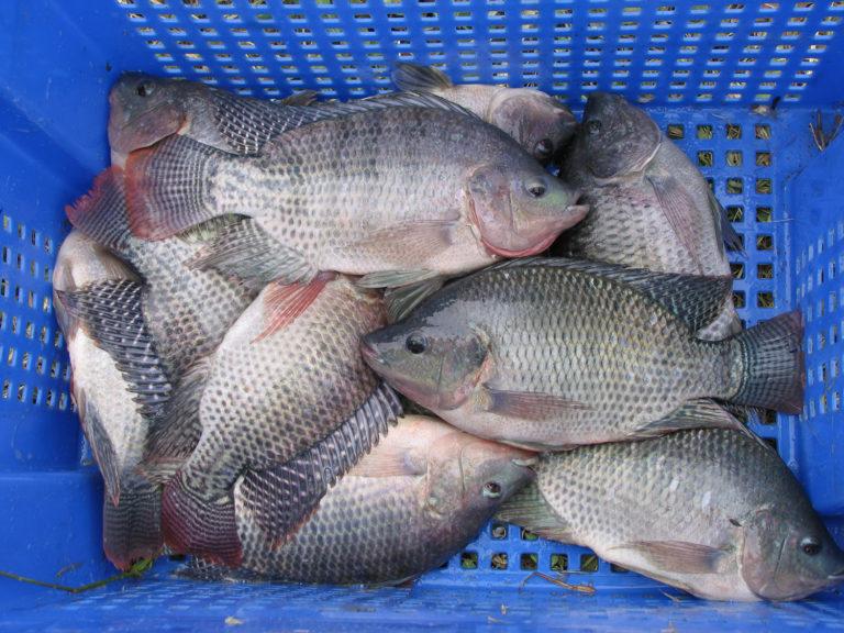 Article image for Revisión y pronóstico de la producción mundial de peces: casi se duplicó en una década