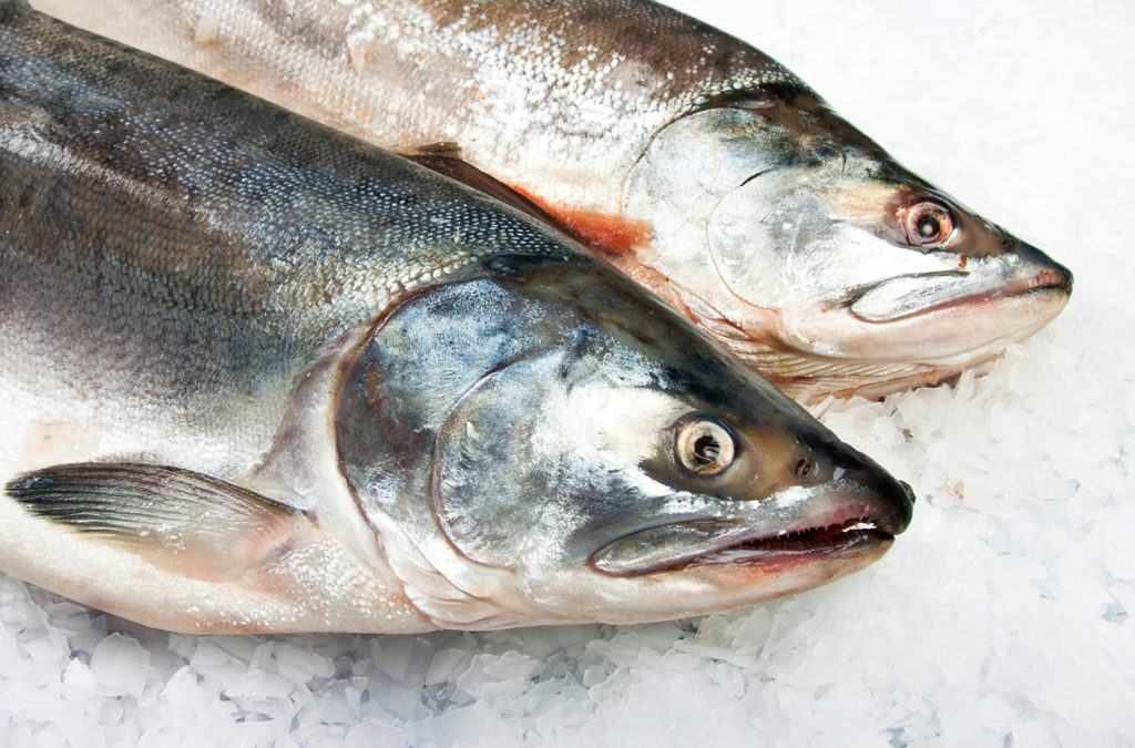 Article image for Salmon scientists collaborate on new global health initiative QASH