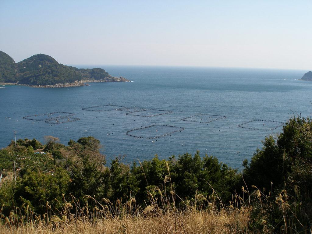 Article image for Japón espera que la acuacultura pueda salvar al atún rojo