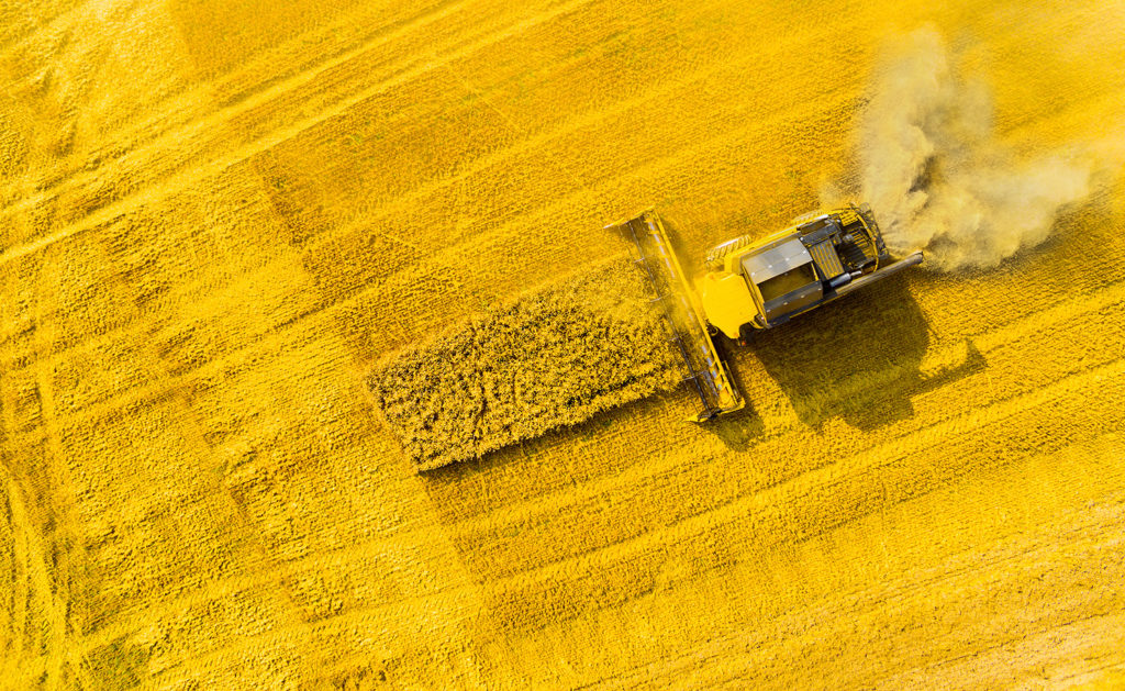 Article image for A push for rapeseed as a viable aquafeed ingredient