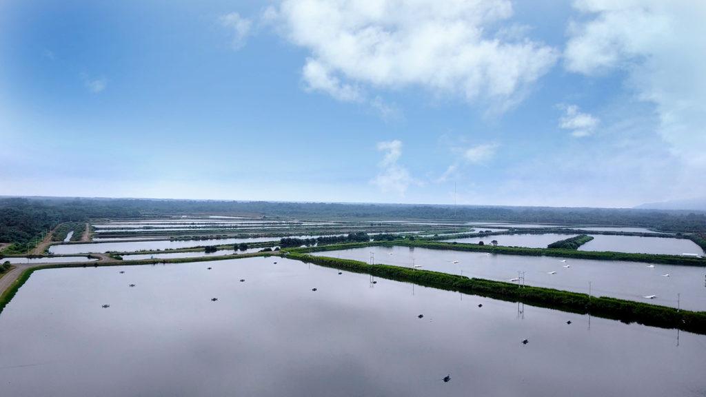 Article image for Eficiencia energética en sistemas de bombeo en granjas acuícolas