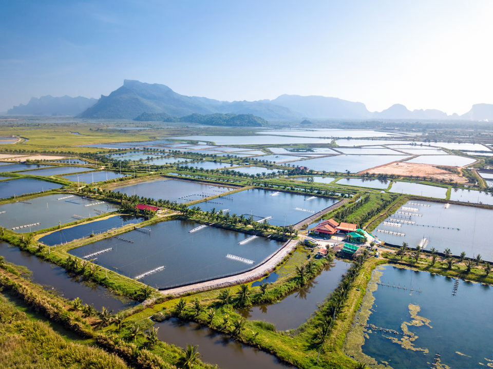 What Is Aquaculture and Why Do We Need It?