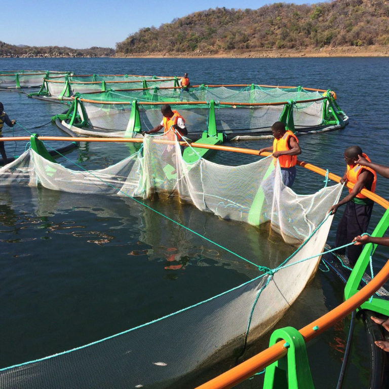 Article image for 'Model' tilapia venture shows mettle in Mozambique
