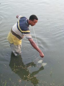 pond fertilization
