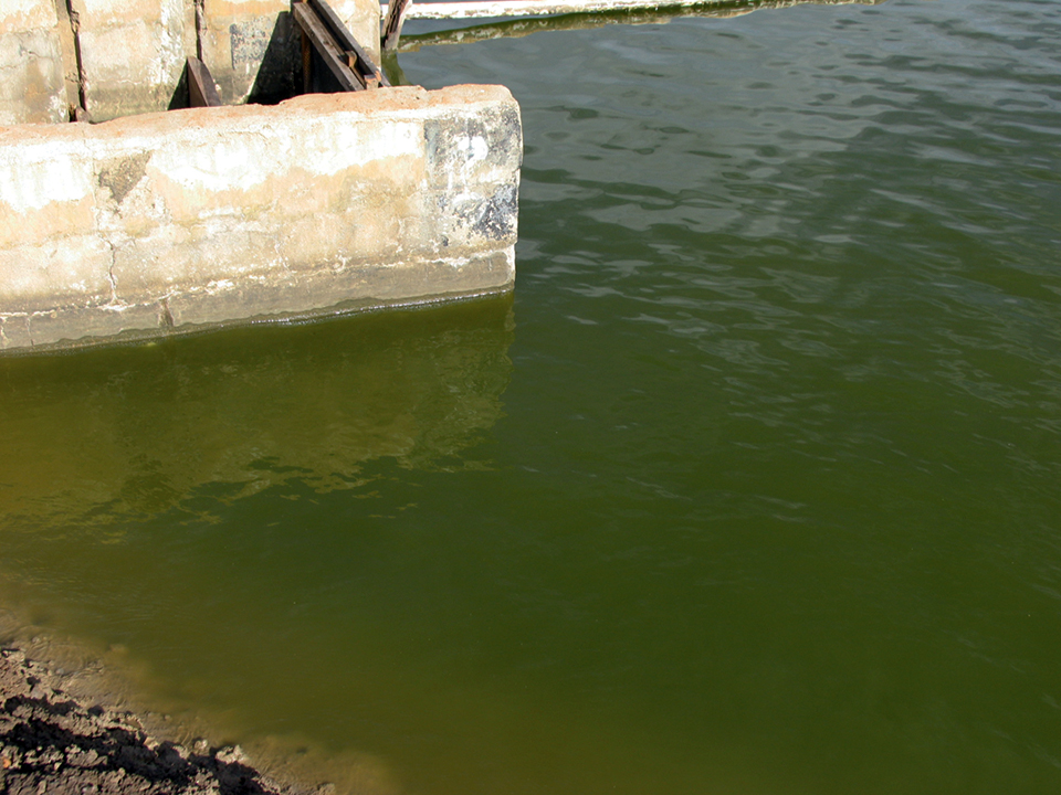 Article image for Nitrogen a limiting factor in aquaculture production