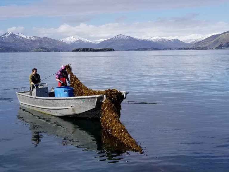Article image for With entrenched aquaculture views, Alaska weighs its future in farming