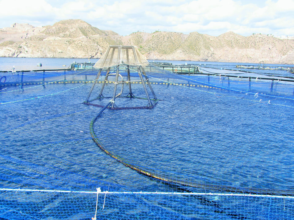 marine aquaculture development