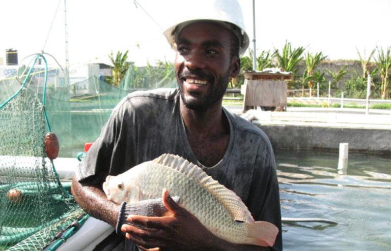 Article image for Haiti's hatchery of hope