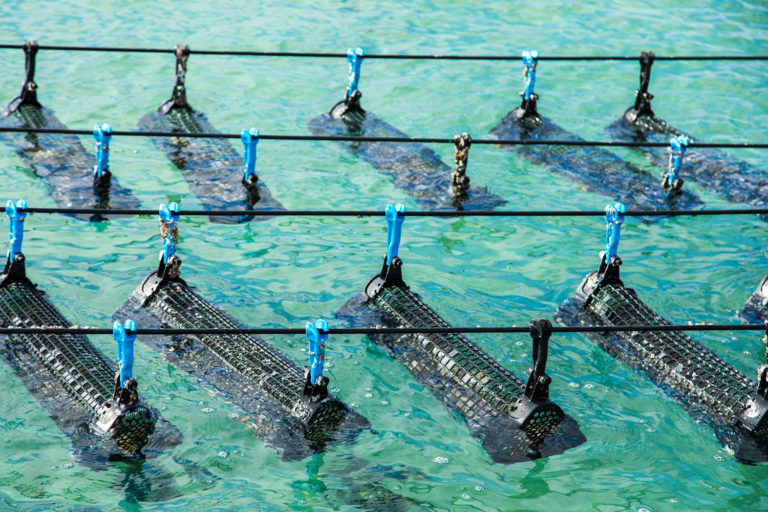 Article image for Advancing the ecosystem services of aquaculture