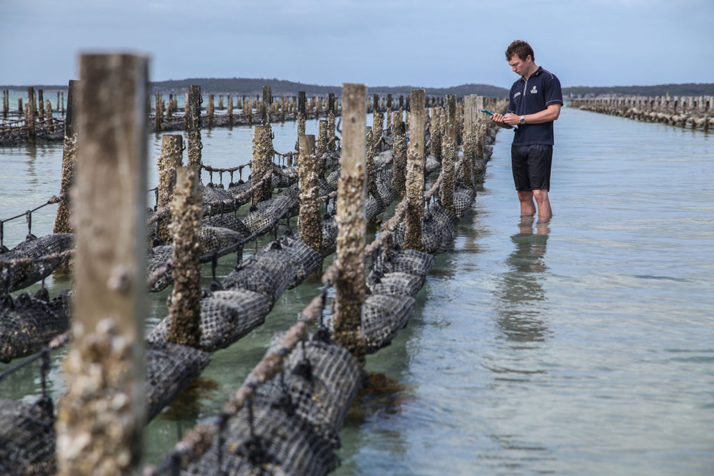 Article image for Avanzando los servicios ecosistémicos de la acuacultura