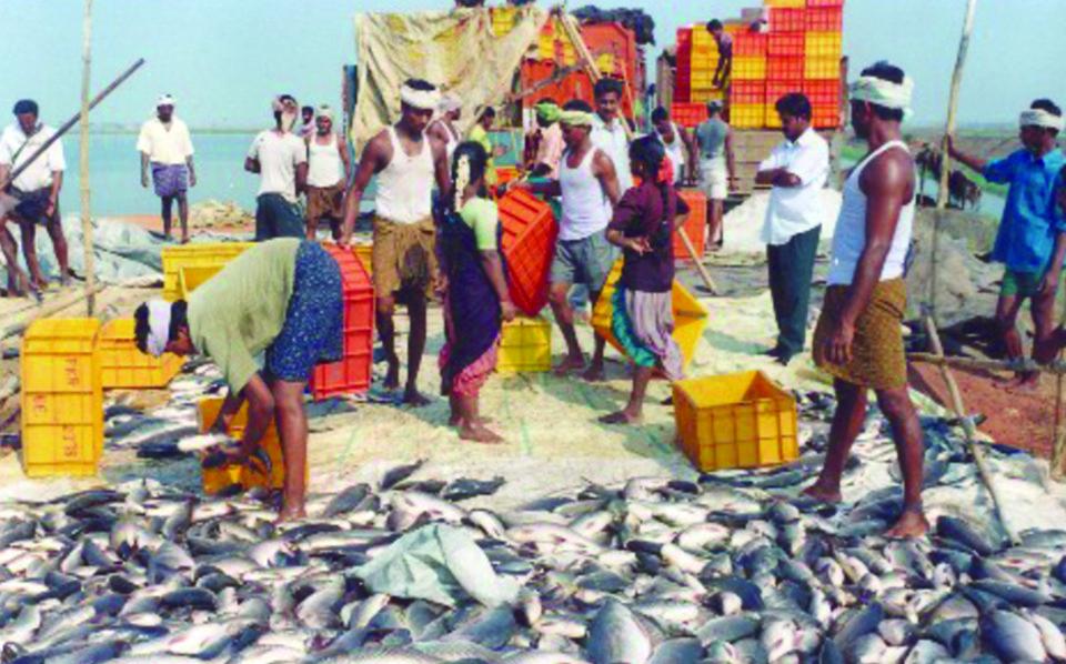 Carp polyculture