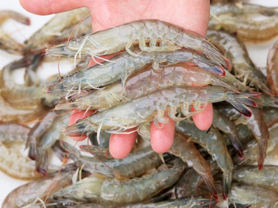 flavor of shrimp