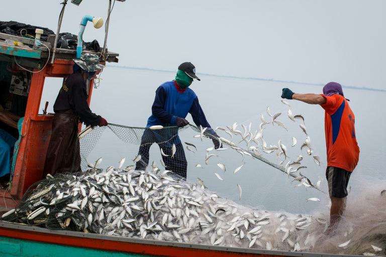 Article image for IFFO, GAA urge Asian trawl fisheries to improve stocks, product quality