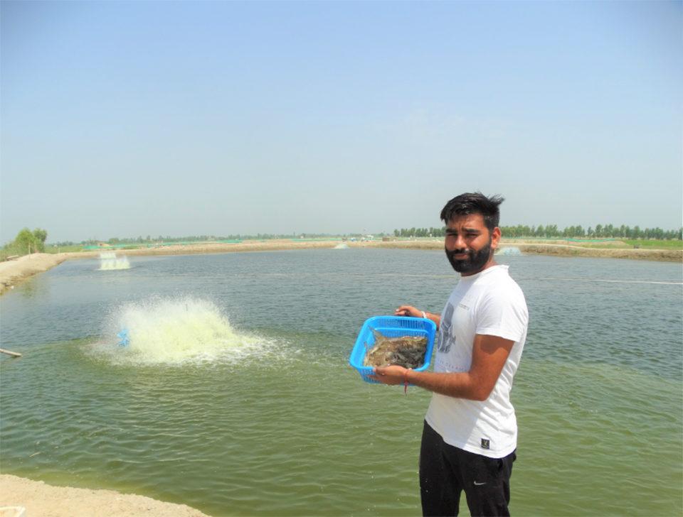 Development of inland saline-water aquaculture in Punjab