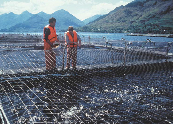 Article image for Meta-analysis examines ingredient substitution for fishmeal in salmon, trout feeds