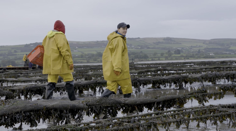 social accountability and aquaculture