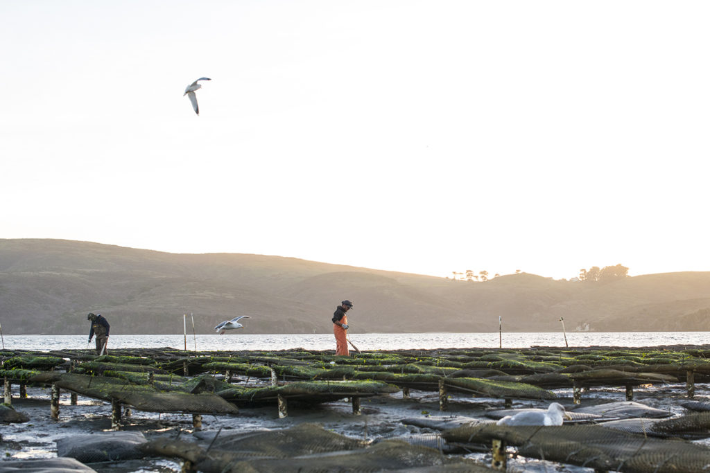 Article image for TNC, Encourage Capital emiten guía sobre inversiones en acuacultura sostenible