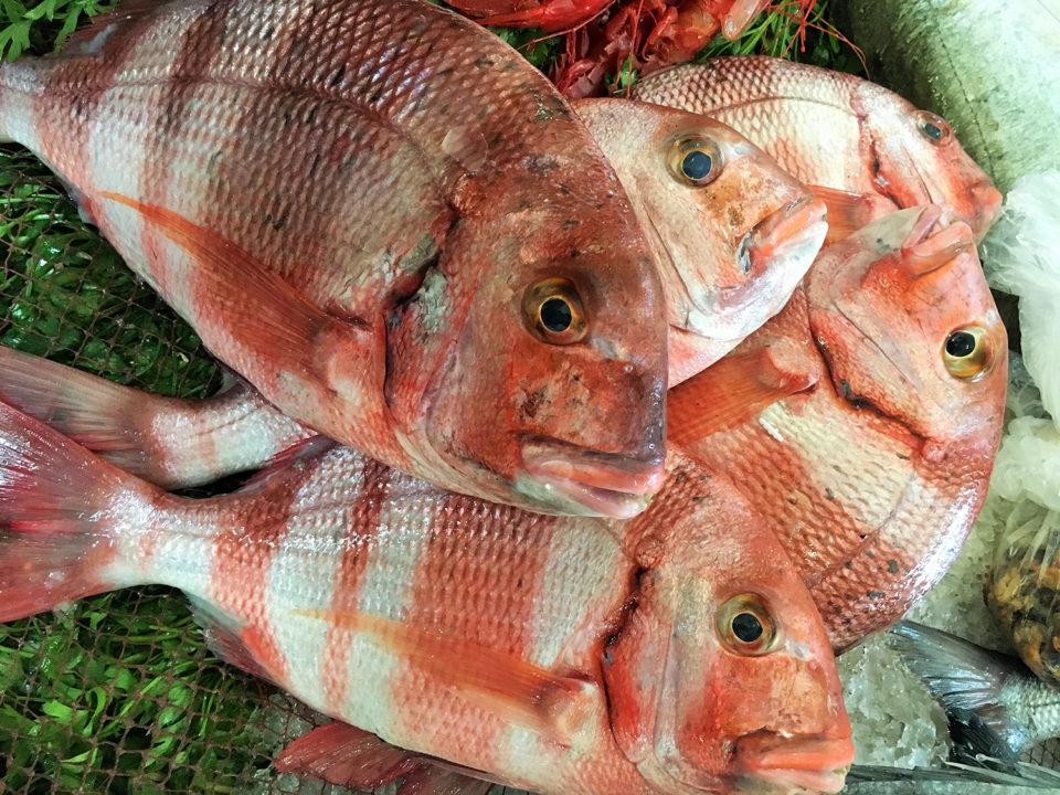 moco de pescado