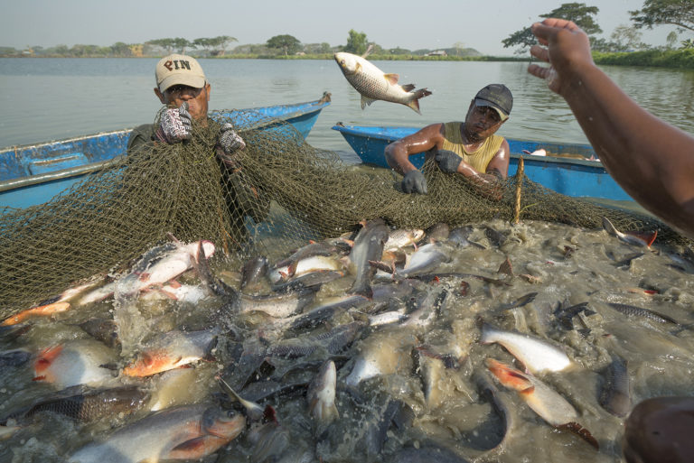Article image for TNC, Encourage Capital issue guidance on sustainable aquaculture investment