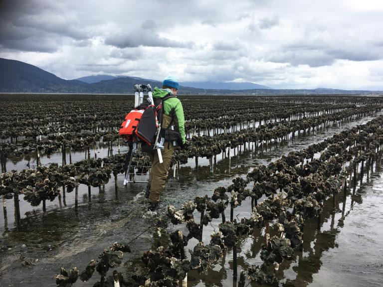 Article image for To protect sensitive habitat, oyster farms turn to high-tech tools