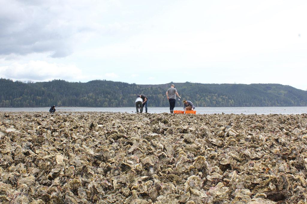 Article image for Para proteger hábitats sensibles, las granjas de ostras recurren a herramientas de alta tecnología