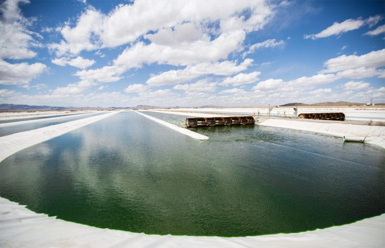 Article image for Algas cultivadas en estanques: ¿Superhéroe viscoso para alimentos acuícolas?