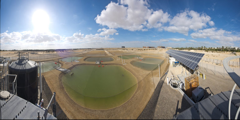 Article image for Puesta a punto: convirtiendo aguas residuales de la acuacultura en combustible de aviación