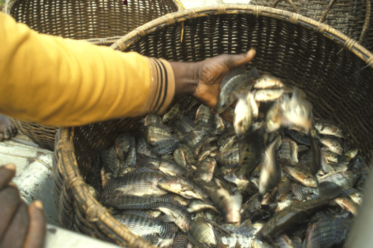 Article image for A helping hand to lend: UK aquaculture seeks to broaden its horizons