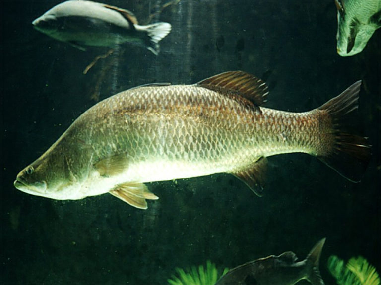 Article image for Organic acids and autolyzed yeast reduce impact of pathogens in fish