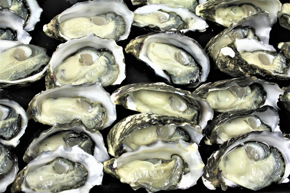 pathogen variability in shellfish