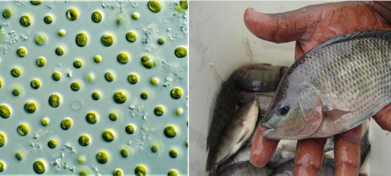 sustainable aquafeeds