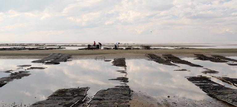 granjas de ostras