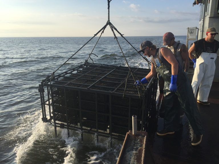 Article image for Can oyster farms protect wild oysters from disease?