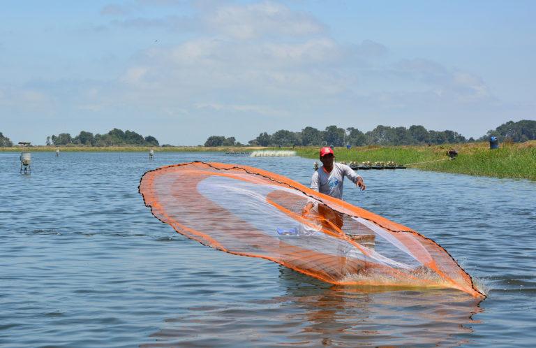 Article image for La tecnología de transparencia pone a la acuacultura en el pie delantero
