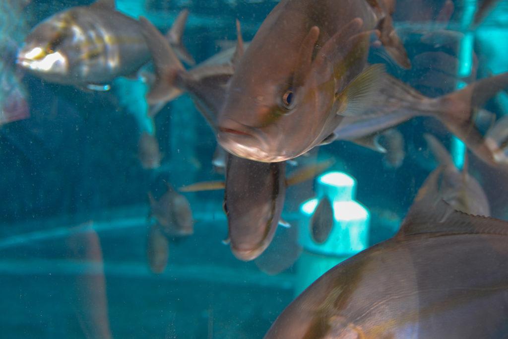 Article image for El 'parque acuático' más grande del mundo establece una nueva fecha de juego