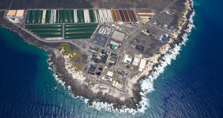 Article image for World's biggest 'aquaculture playground' sets up new playdate