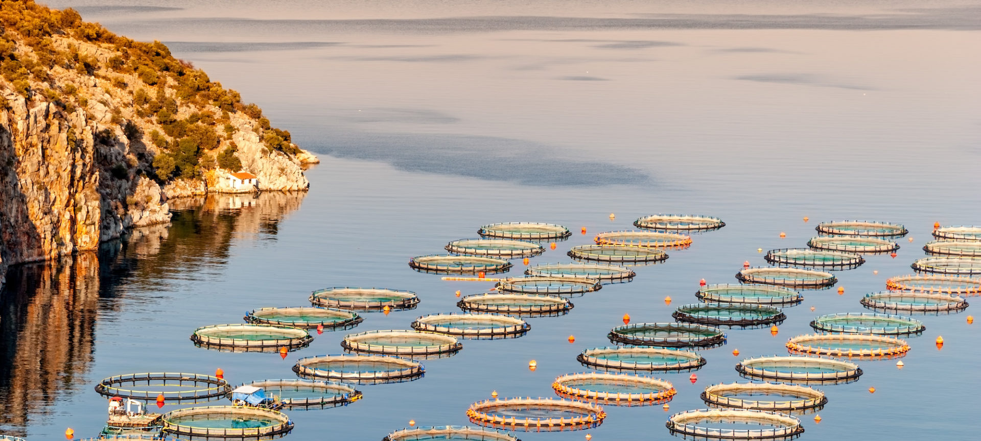 farmed fish food safety