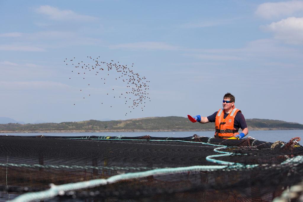 Article image for Con los subproductos, obteniendo más de, y para, los peces
