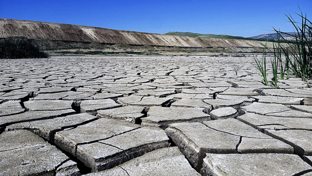 Article image for Climate change likely already affecting global food production