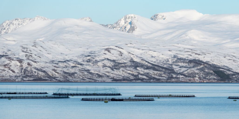 Featured image for Where Does Farmed Seafood Come From?