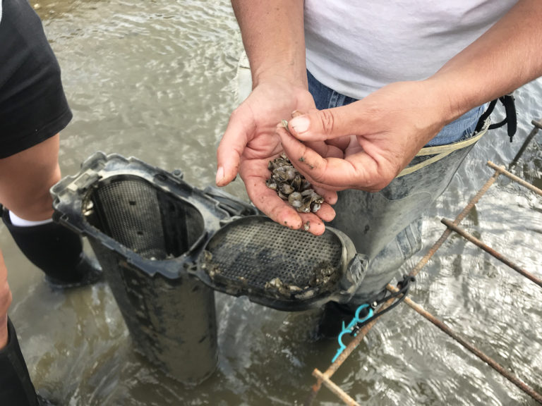 Article image for In Delaware Bay, a delicate balancing act for shellfish farms