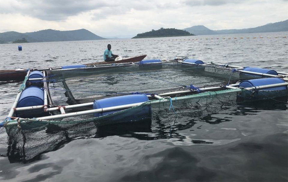 Article image for USSEC: Aquaculture 'showing some life' in sub-Saharan Africa
