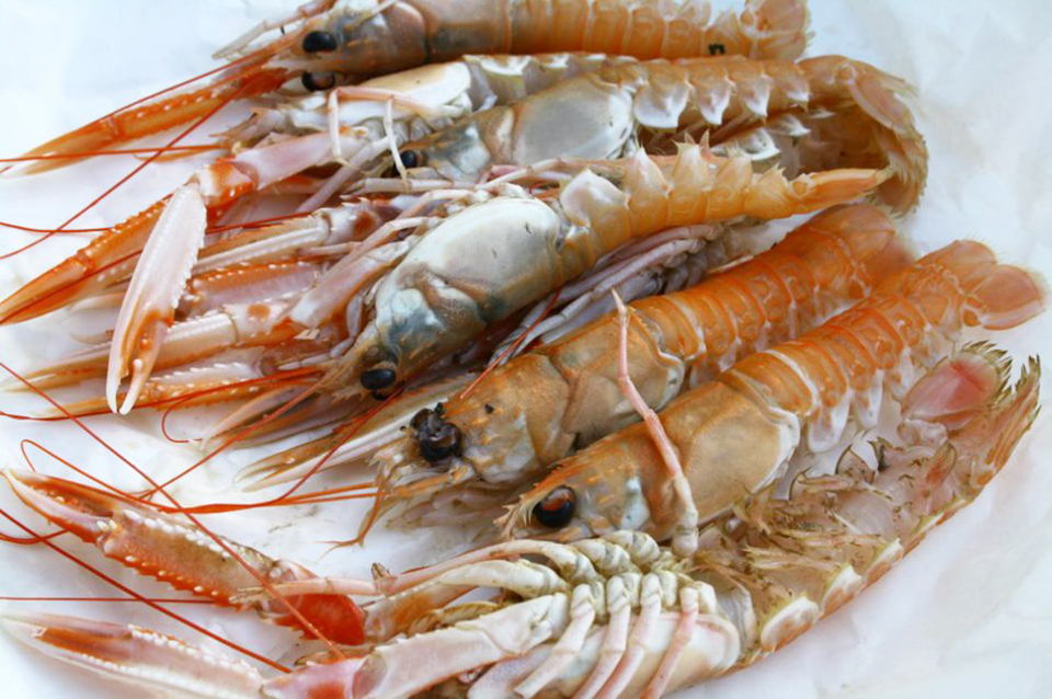 Article image for Plastic 2.Ocean: Seafood packaging, made from shellfish