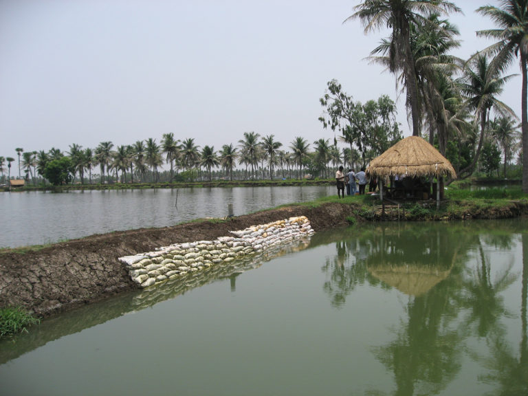 Article image for The fish farming industry of India