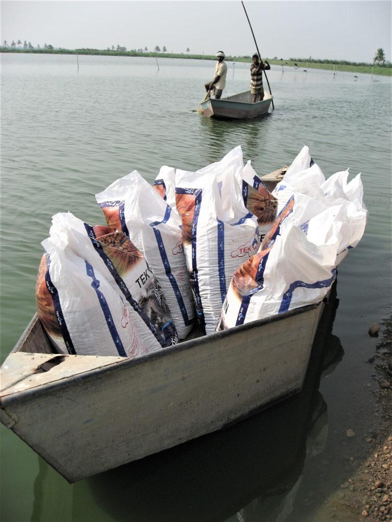 Article image for La industria de cultivo de peces de la India