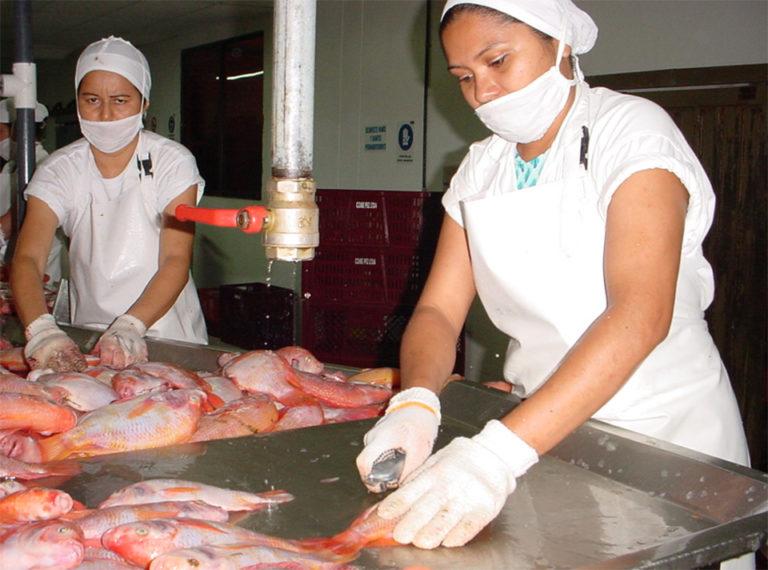 Article image for Evaluación del ensilaje de residuos de procesamiento de tilapia en dietas de camarones blancos del Pacífico