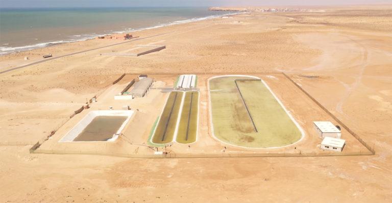 Article image for Luz solar, agua de mar y viento: una receta simple para el ambicioso cultivador de algas Susewi